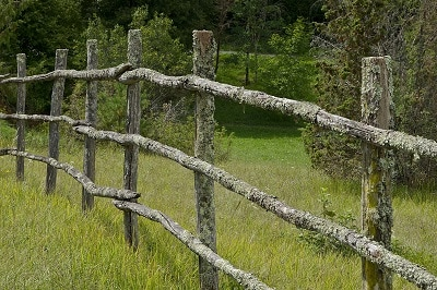 Old field fence